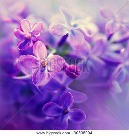 Lilac flowers bunch white art design background. Beautiful violet Lilac flower closeup. Watercolor nature floral background