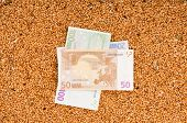 picture of crop  - Monetary crop as a symbol of success of sale of a new crop of wheat - JPG