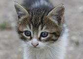 stock photo of tabby cat  - Close up portrait of tabby house cat - JPG