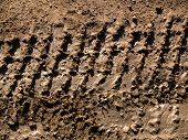 Tracks_In_Mud