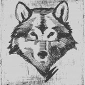 picture of wolf-dog  - Wolf head hand drawn sketch grunge texture engraving style - JPG