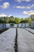 foto of tomato plant  - tomato and cucumber plants in a greenhouse - JPG