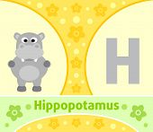 picture of hippopotamus  - The English alphabet with Hippopotamus  - JPG