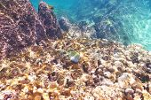 stock photo of coral reefs  - Coral reef and fish at Seychelles - JPG