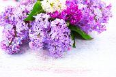 image of violet flower  - Lilac Spring flowers border over white wooden background - JPG