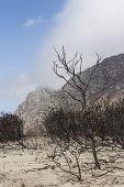 pic of veld  - Devastation on Ou Kaapse Weg after a wildfire - JPG