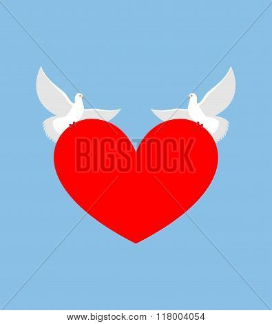 White Dove Holds Heart. Two White Bird Is Symbol Of Purity. Red Heart Symbol Of Love. Two Lovebirds