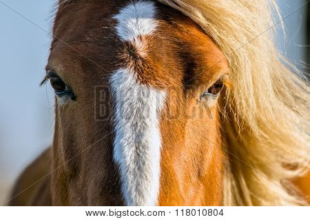 Close up of a horse head in sunlight