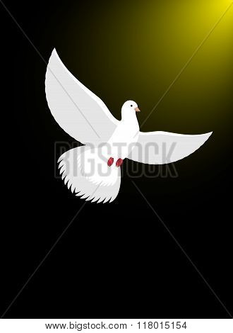 White Dove Flies In Dark On Divine Light. Magical Glow And White Bird. Christian Symbol Illustration