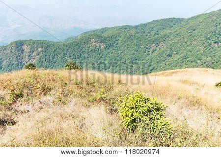 Kew Mae Pan Nature Trail At Doi Inthanon National Park ,chiangmai Thailand