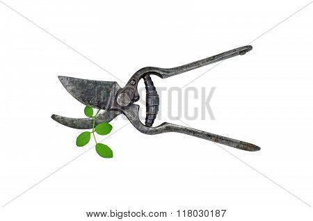 Old Garden Pruner And Green Leaf
