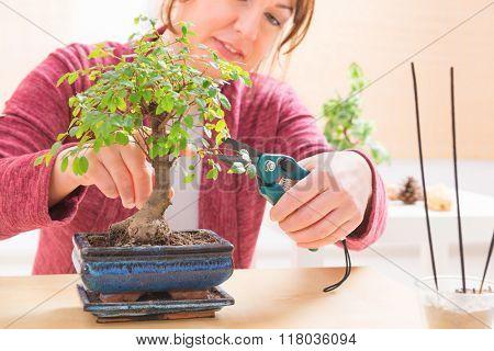 Beautiful woman trimming bonsai tree