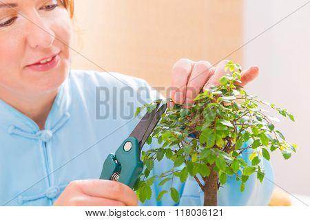 Beautiful woman wearing traditional chinese uniform trimming bonsai tree