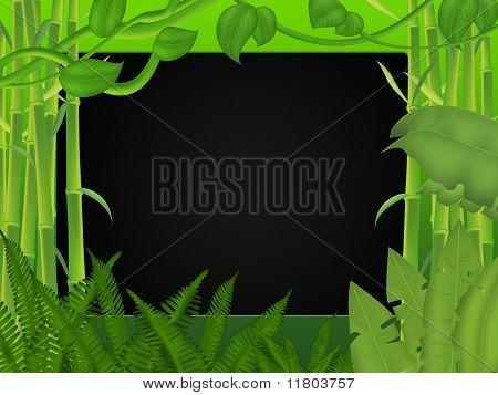 Tropics background