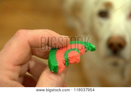 white dog blurred in background watching a partially eaten cookie held in hand hoping for a treat