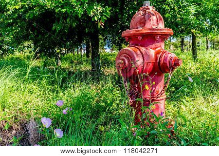 Red Texas Fire Hydrant with Texas Wildflowers in Springtime.