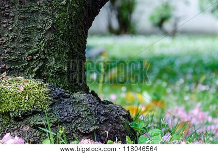 Trunk And Flowers