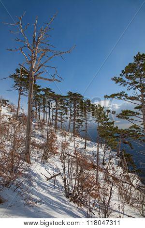 beautiful winter forest landscape. forest