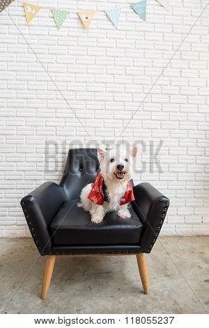 White Terrier, Westie Highland Dog