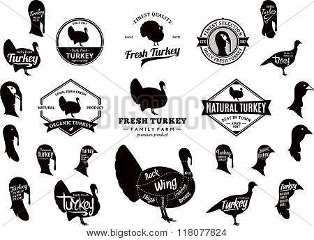 Vector Turkey Logo, Icons, Charts And Design Elements