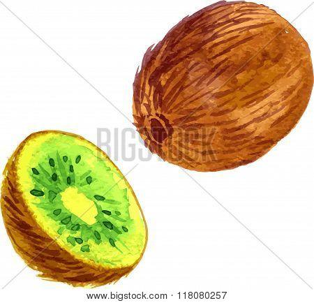 watercolor fruit, kiwi