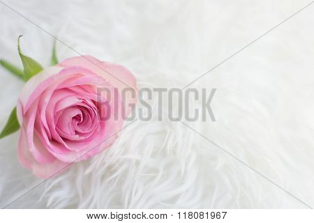 Single rose in a romantic setting