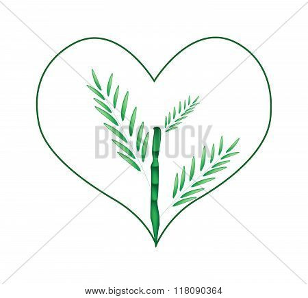 Fresh Bamboo Tree In A Heart Shape