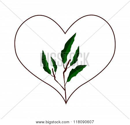 Evergreen Leaves In A Heart Shape Frame
