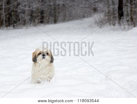 Small Dog In A Snowy Forest