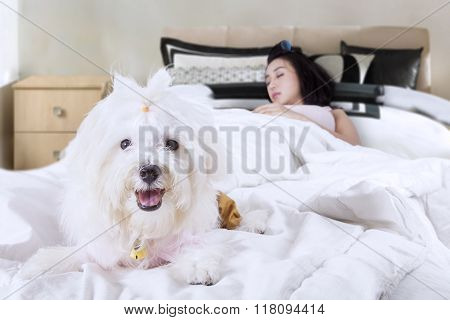 Dog Accompanies His Owner Sleeping On Bed