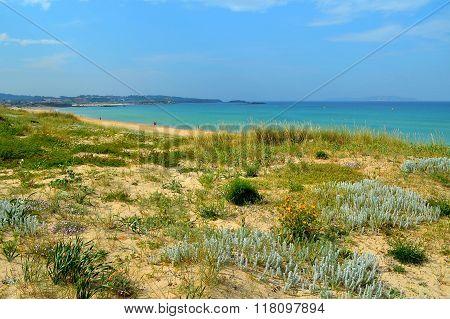 Natural dunes on Lanzada beach (Pontevedra, Galicia, Spain)