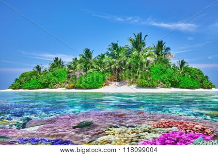 Tropical Island And The Underwater World In The Maldives. Thoddoo Island.