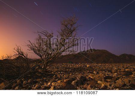 Magic night in Israel Negev desert. Stars shining