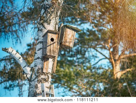 Two nesting boxes on the birch.