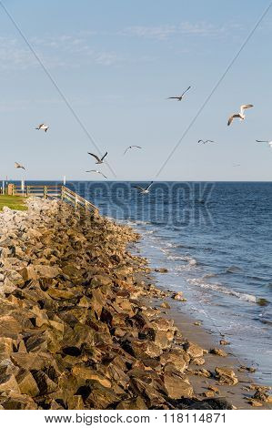 Rock Seawall With Seagulls