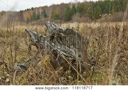 Tree Stump With Face Of An Old Man