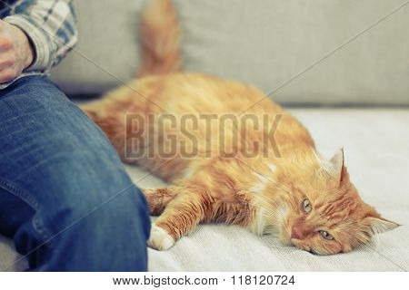 Man with fluffy rad cat on a sofa