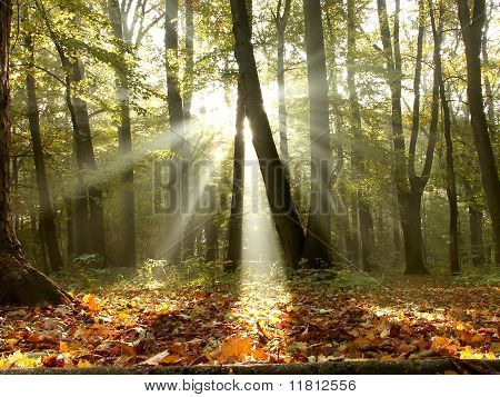 Morning sun falls into misty autumnal woods