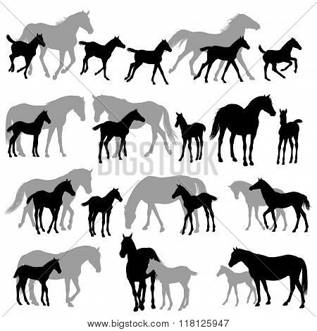 Mares Annd Foals Silhouettes Copy