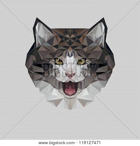 Cat in polygonal style. Triangle vector illustration of animal for use as a print on t-shirt and pos