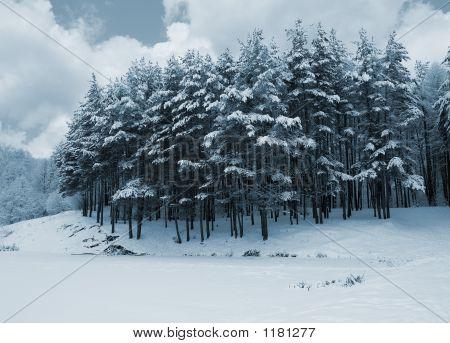 Pines Tonemapped