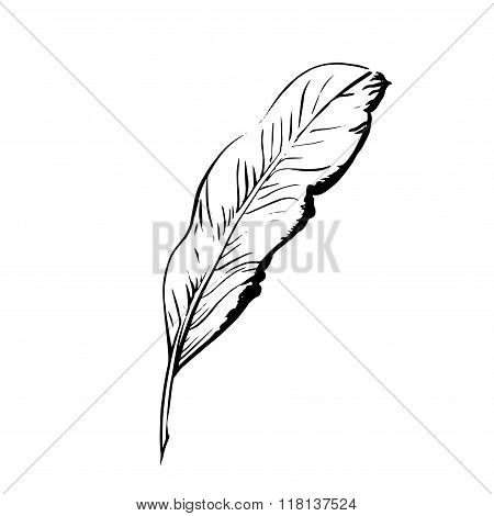 Handdrawn bird feather, Symbol of knowledge, writing and learning. Vector black and white illustrati
