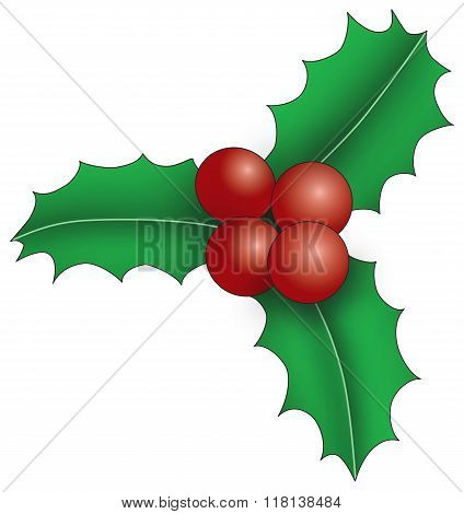 Illustration of three holly leaves with berries