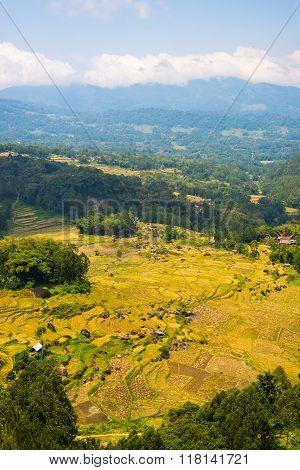 Lush Green Rice Field, Expansive Landscape In Indonesia