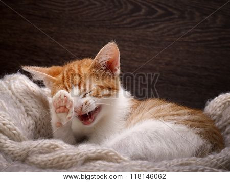 poster of Funny cat laughing. Portrait of a laughing cat largly