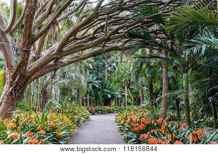 Botanic garden alley walkway. Sydney Royal Botanic Gardens alley with tree and orange flowers