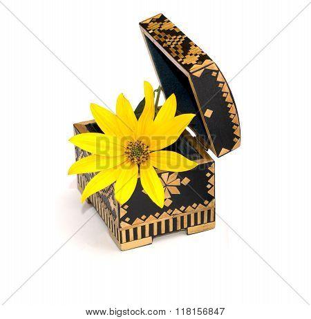 Yellow Flower In An Open Casket, Isolate