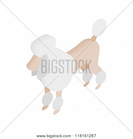 White French poodle isometric 3d icon