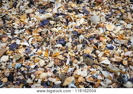 Seashells background. Many sea shells on a beach summer background. Small seashells and sand beach holiday background summer backdrop. Close up