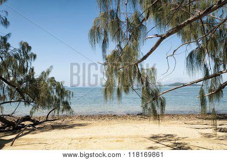 Tropical Beach in Australia